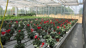 greenhouse sub-irrigating base