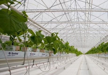 glass-greenhouse5